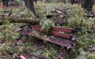 Під час буревію на хлопця з дівчиною впало дерево: загинули на місці