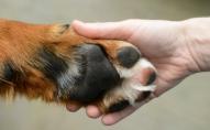 Біля Луцька патрульні поліцейські рятували собаку. ВІДЕО