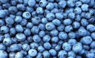 Чому не можна купувати ягоди на стихійних ринках. ВІДЕО