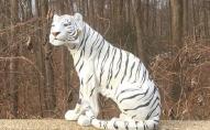 У США поліцейські, після скарги водія, нейтралізували тигра біля дороги.