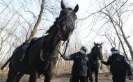 У Польщі планують ввести пенсії для собак і коней