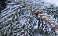 Синоптикиня повідомила, чи буде на Новий рік сніг