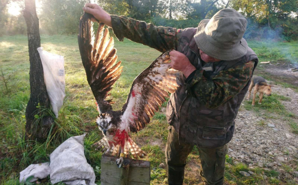 Українські браконьєри вбили рідкісного червонокнижного птаха. ФОТО