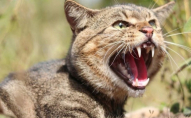 Скажений кіт змусив сім'ю на Рівненщині піти до лікарні