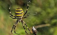 На Волині 5-річний хлопчик знайшов небезпечного павука. ФОТО