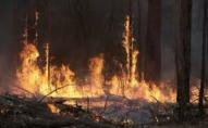 Волинянин спалив лісу на 90 тисяч грн, а штрафу заплатить лиш 5000