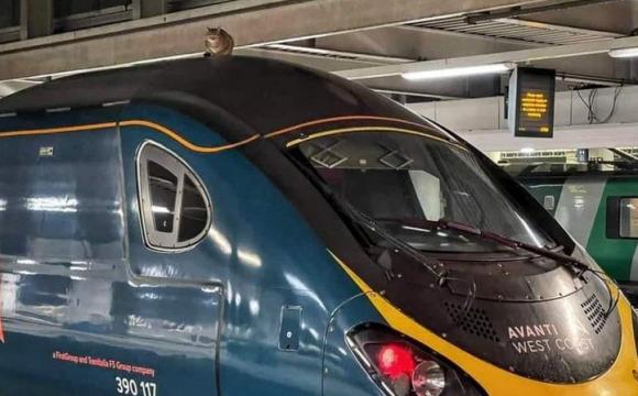 Кіт на даху зупинив швидкісний поїзд на 2,5 години. ФОТО