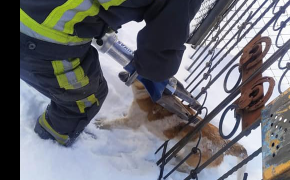 У Ківерцях в паркані застряг собака: викликали ДСНС. ФОТО