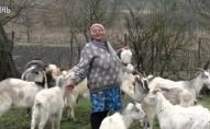 На Волині жінка утримує козячу ферму. ВІДЕО
