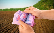 За скільки можна продати гектар землі на Волині