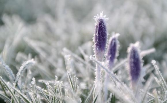 Перші заморозки раптово прийдуть в Україну: прогноз народного синоптика з Волині
