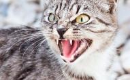 Через скаженого кота у селі запровадили карантин та вакцинацію