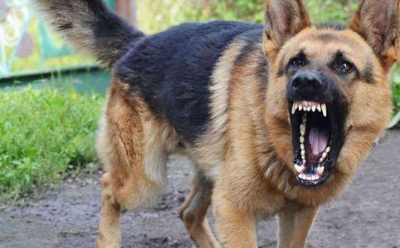 Назвали породи найагресивніших собак