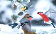 Волинян просять підгодовувати птахів під час зимової стужі