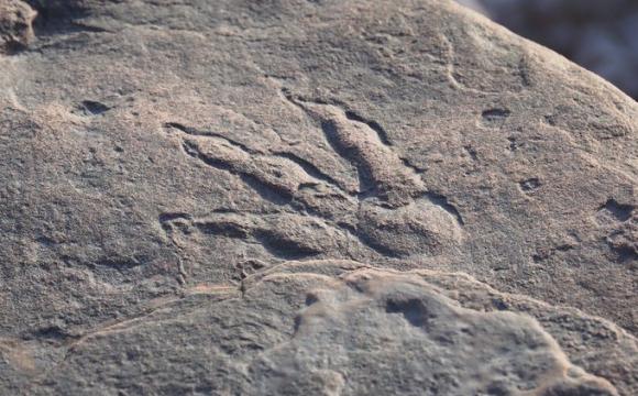 Чотирирічна дівчинка знайшла слід динозавра, якому 220 мільйонів років