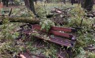 Останнє побачення: деталі загибелі молодої пари у львівському парку. ВІДЕО