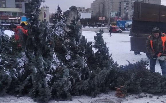 Біля РАЦСу комунальники зрізали блакитну ялинку. ФОТО. ВІДЕО