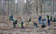 За рік площа волинських лісів збільшилась на 56 гектарів