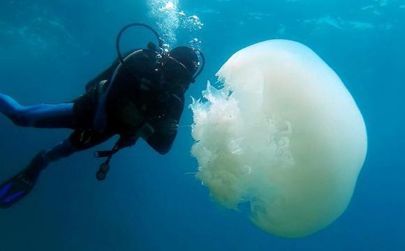 Узбережжя Анталії окупували гігантські медузи. ФОТО