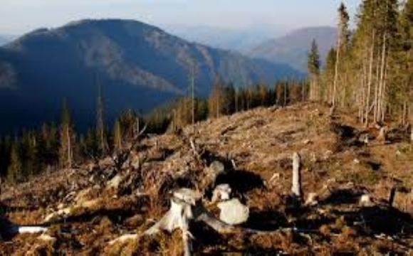 ООН застерігає: через постійні вирубки лісів Карпати в реальній небезпеці