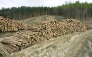 На Ківерцівщині знайшли понад 150 незаконно зрубаних дерев. ФОТО