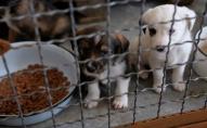 У Луцьку не варто робити притулок для тварин: директорка КП Ласка назвала причину