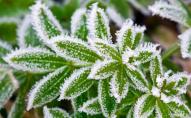 Україну накриють заморозки: назвали дати та регіони