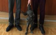Напились і вкрали: встановили особи злочинців, які понищили кликуна в Луцьку. ФОТО