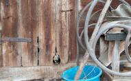 На Львівщині дика козуля травмувала трьох дітей