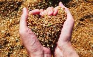 Україна купує пшеницю за кордоном?