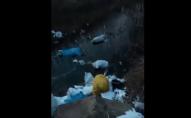 Невідомі закидали сміттям берег річки Стир біля Луцька. ВІДЕО