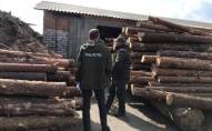 У селі на Волині пройшли обшуки, виявили сумнівну деревину. ФОТО
