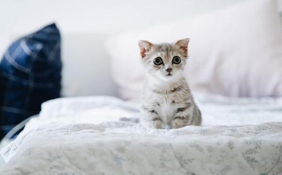 Невідомі повідрізали безпритульним кішкам передні лапи