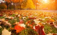 26 жовтня - яке сьогодні свято: прикмети та заборони