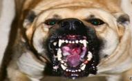 На Волині жителі скаржаться на агресивних собак