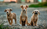 Лучани скаржаться на безпритульних собак
