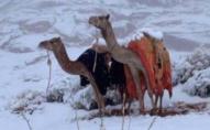 Саудівську Аравію засипає снігом: негода протримається кілька днів. ВІДЕО