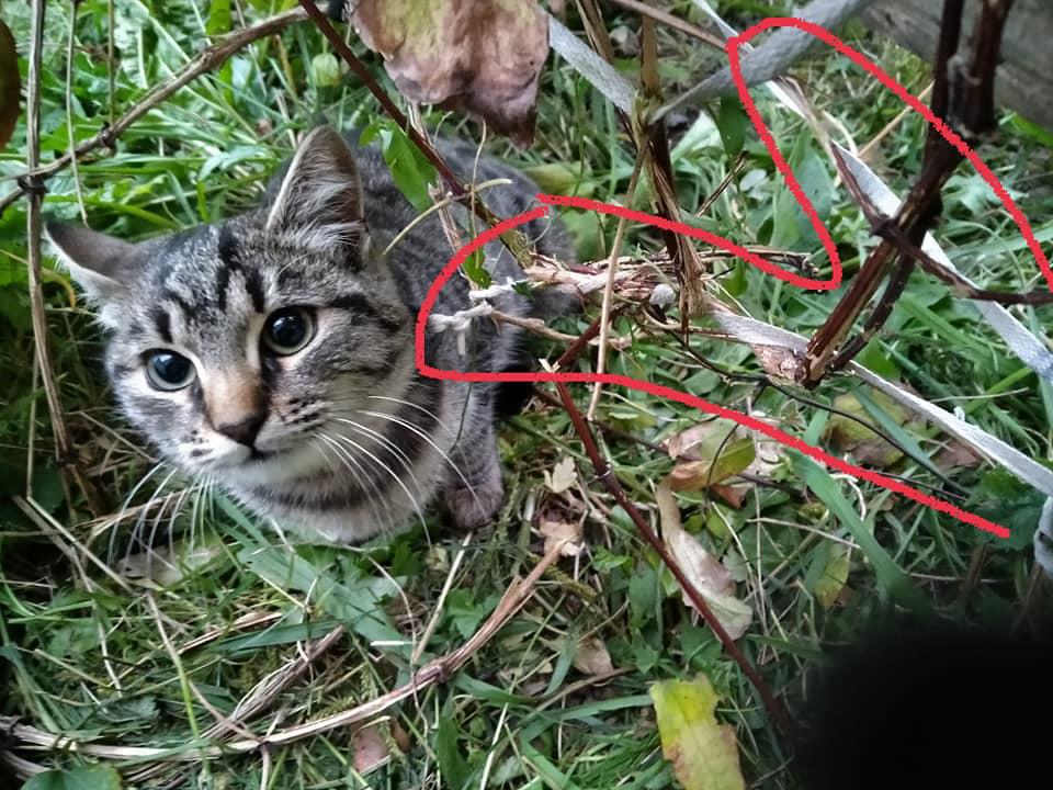 Вночі у Луцьку домашню кішку прив'язали у кущах мотузкою. ФОТО