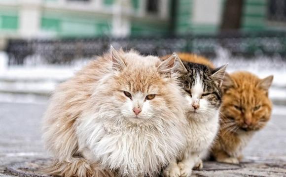 Підліток відрізав голови та розпорював вуличних котів