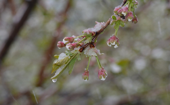 ДСНС попереджає про заморозки в більшості регіонів
