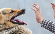 На Волині у собаки виявили сказ