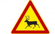 На авто під час руху вискочило ціле стадо оленів. ВІДЕО