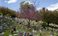 Двох волинян, які вчинили наругу над могилами, покарали умовно