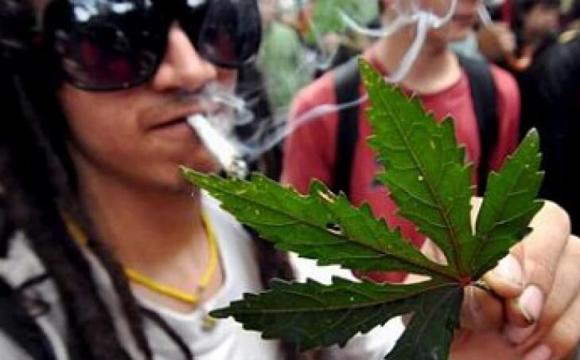 У Канаді пес добу «відходив» через «передоз» марихуаною