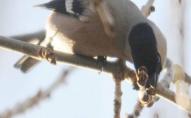 Фотограф з Луцька показав фото перших весняних птахів
