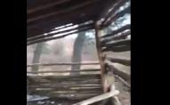 У лісі неподалік Луцька невідомі зруйнували альтанку. ВІДЕО