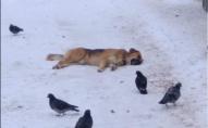 Волинянам розповіли, як врятувати отруєну собаку? ФОТО