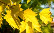 Малохмарно та без опадів: якою буде погода на Волині 8 жовтня