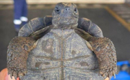 Митники виявили у валізі 185 черепах: 10 уже були мертвими. ФОТО