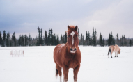 До прибирання снігу залучили коня. ВІДЕО